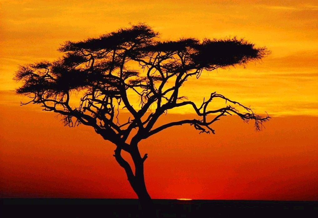 2010 Sunset tree