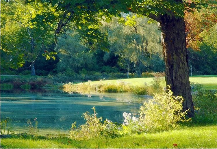 Albert Bierstadt Quiet Pond