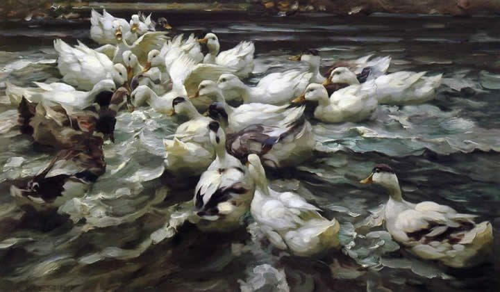 Alexander Koester Ducks in a Pond
