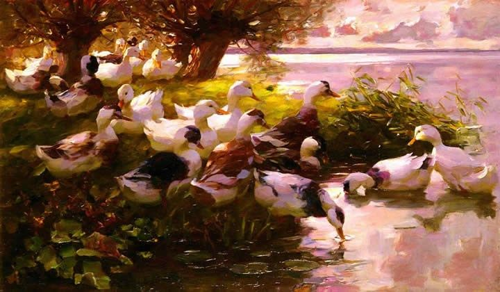 Alexander Koester Max Ducks On A Lake