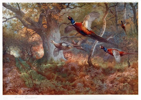 Archibald Thorburn Pheasants Through the Oak Wood