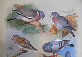 Archibald Thorburn A Wood Pigeon A Stock Dove A Turtle Dove A Rock Pigeon painting