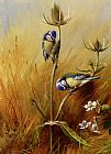 Archibald Thorburn Bluetits On A Teasel painting
