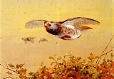 Archibald Thorburn English Partridge In Flight painting