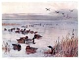 Archibald Thorburn Mallard on the Lake at Sandringham painting