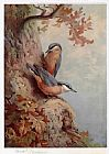 Archibald Thorburn Nuthatches painting