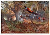 Archibald Thorburn Pheasants Through the Oak Wood painting