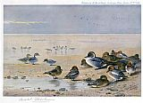 Archibald Thorburn Pintail Wigeon and Teal painting