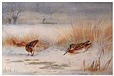 Archibald Thorburn Snipe painting