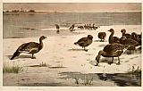 Archibald Thorburn Unapproachable Geese painting