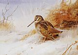 Archibald Thorburn Winter Woodcock painting