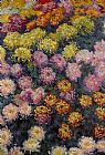 Claude Monet Bed of Chrysanthemums painting