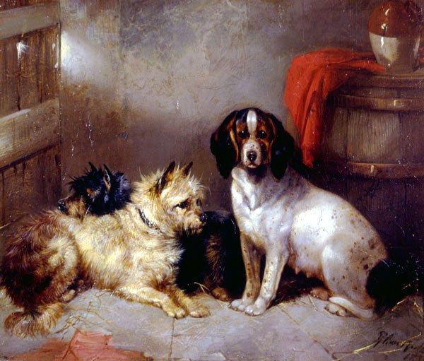 George Armfield Terriers and Hound