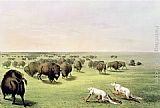 George Catlin Hunting Buffalo Camouflaged with Wolf Skins, circa 1832 painting