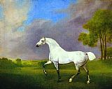 a grey horse Canvas Prints - A Grey Horse