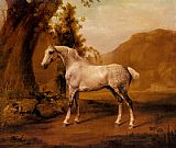 a grey horse Canvas Prints - A Grey Stallion In A Landscape