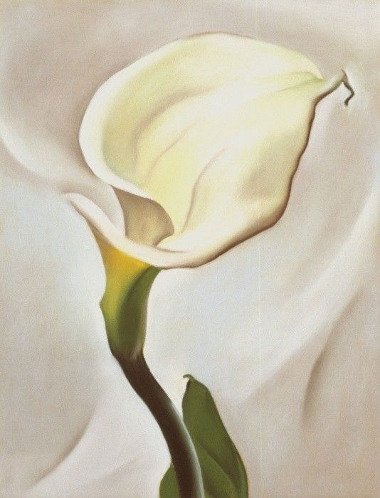 Georgia O'Keeffe Calla Lily Turned Away 1923