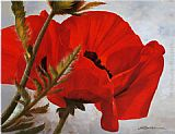 Heinz Scholnhammer The Red Poppy painting