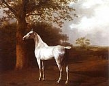 a grey horse Canvas Prints - White Horse in Pasture