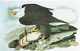 John James Audubon Bald Eagle painting