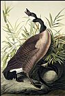 John James Audubon Canada Goose painting