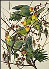 John James Audubon Carolina Parrot painting