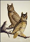 John James Audubon Great Horned Owl painting