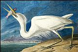 John James Audubon Great White Heron painting