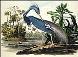John James Audubon Louisiana Heron painting