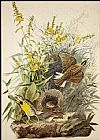 John James Audubon Meadowlark painting