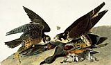 John James Audubon Peregrine Falcon painting