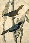 John James Audubon Purple Grackle painting