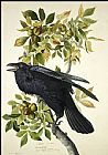 John James Audubon Raven painting
