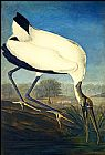 John James Audubon Wood Ibis painting