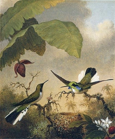 Martin Johnson Heade Black-Eared Fairy