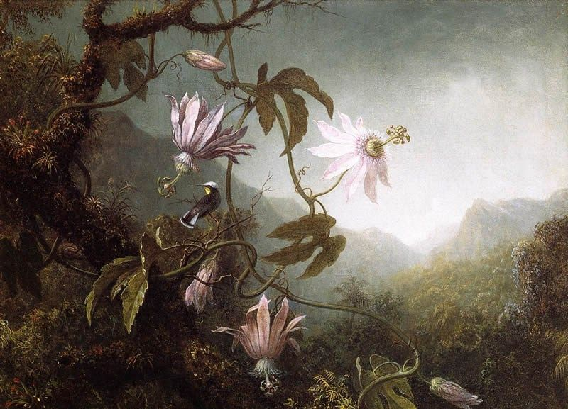 Martin Johnson Heade Hummingbird Perched near Passion Flowers