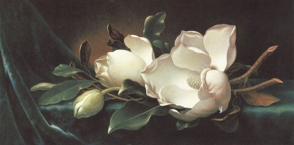 Martin Johnson Heade Magnolia Blossoms on Blue Velvet