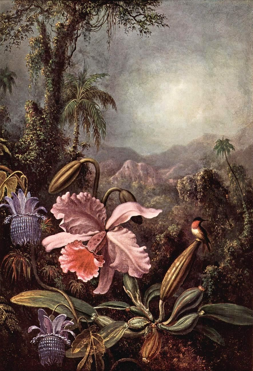 Martin Johnson Heade Orchids passion flower and hummingbirds