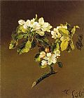Martin Johnson Heade A Spray of Apple Blossoms 1870 painting