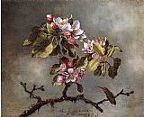 Martin Johnson Heade Apple Blossoms and Hummingbird painting