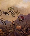 Martin Johnson Heade Frilled Coquette painting