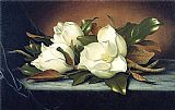 a magnolia on red velvet Paintings - Giant Magnolias