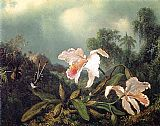 Martin Johnson Heade Jungle Orchids and Hummingbirds painting