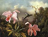 Martin Johnson Heade Orchids and Hummingbird 2 painting