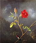 Martin Johnson Heade Red Rose with Ruby Throat painting