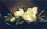 Martin Johnson Heade Two Magnolias and a Bud on Teal Velvet painting