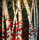 Maya Eventov Autumn Birches painting