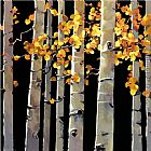 Michael O'Toole Aspen Grove I painting