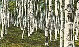 Norman Parkinson White Birch Forest, Wisconsin painting