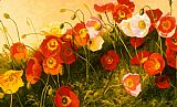 study for celebration Paintings - Poppies In Celebration